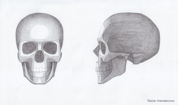 Drawn skull shaded Henderson: Shaded Shaded Tania Skull