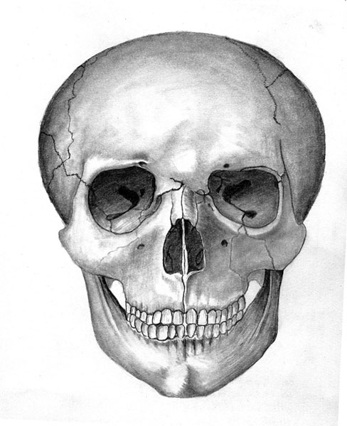 Drawn skull shaded DeviantArt LaughingTree Skull Skull by