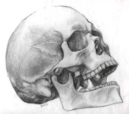 Drawn skull shaded Class drawing Human 207 shaded