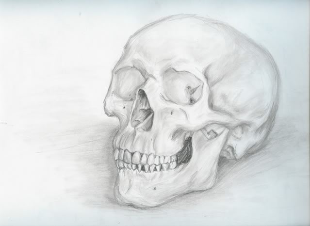 Drawn ssckull skeleton Skull Art: Constructed Real Real