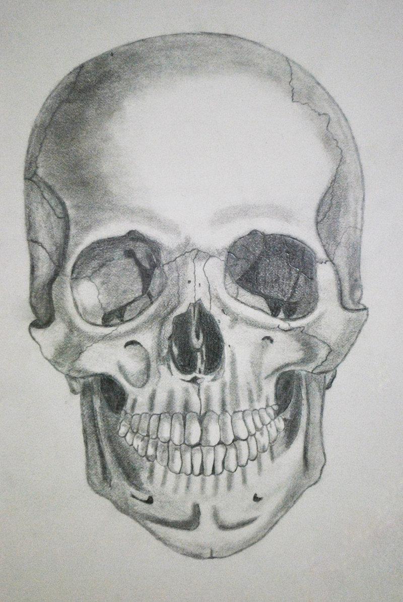 Drawn skull structure Skull skull anatomy Drawing photo#7