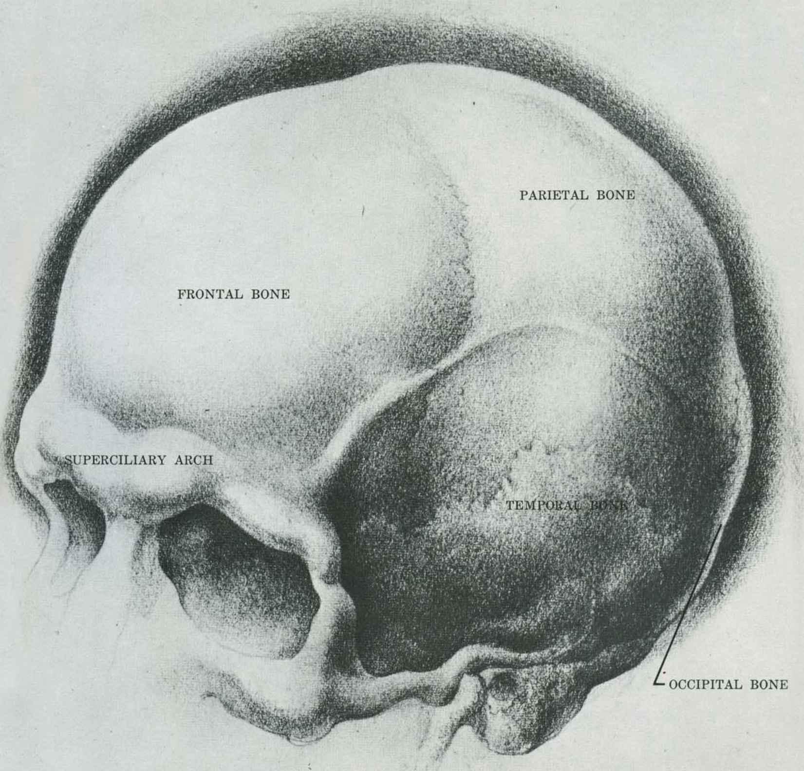 Drawn skull structure Drawing Arts Drawing Joshua Skull