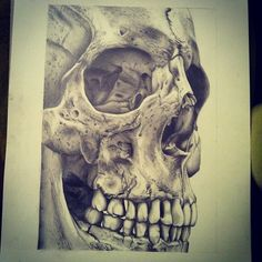 Drawn ssckull structure Find draw sketch Pin human