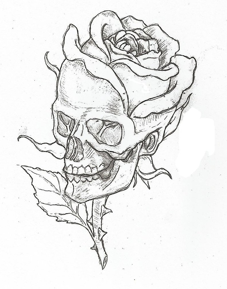 Drawn skull unique Drawing skull_rose_by_epickickboxer on d5o0axr this