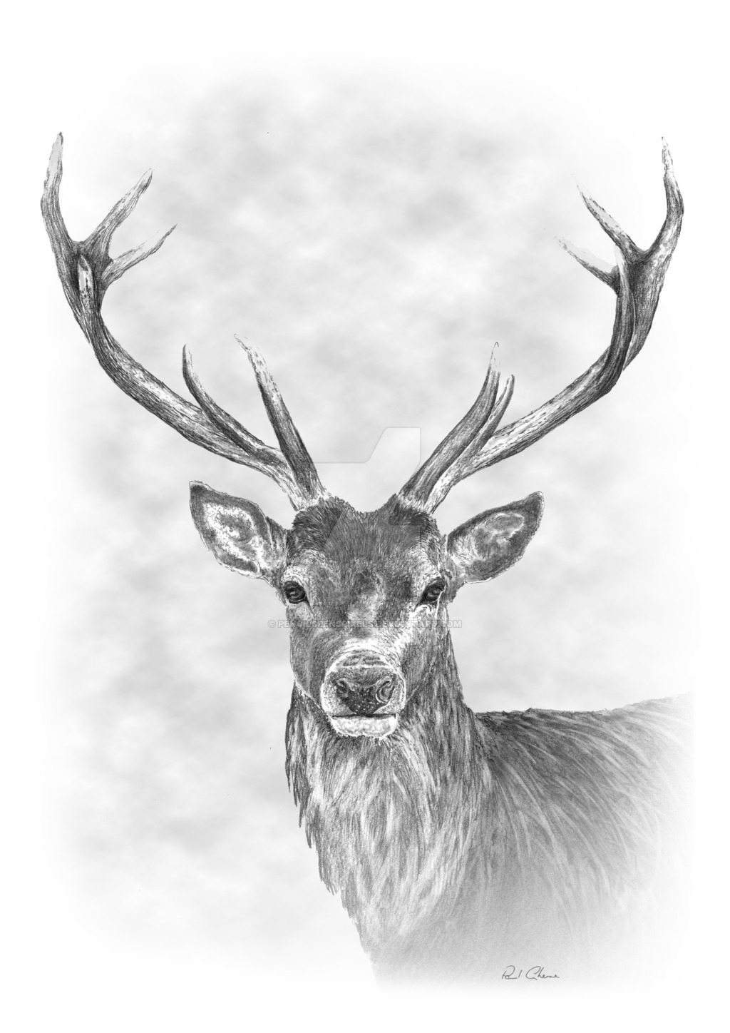 Drawn stag Drawing on Pencil by PencilsPensPixels