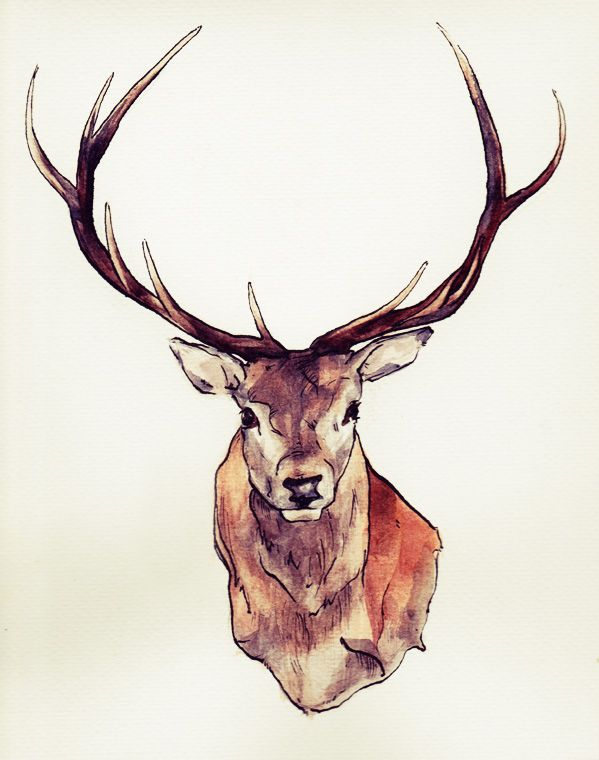 Drawn stag The drawing ideas best