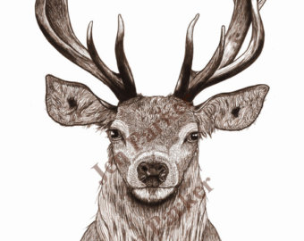Drawn stag Deer Giclée print Pen Red