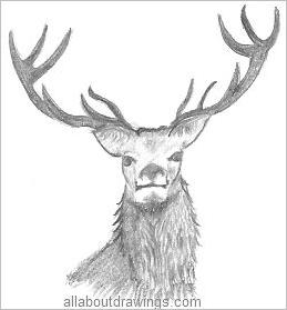 Drawn stag Drawing Animals From Pencil Stag