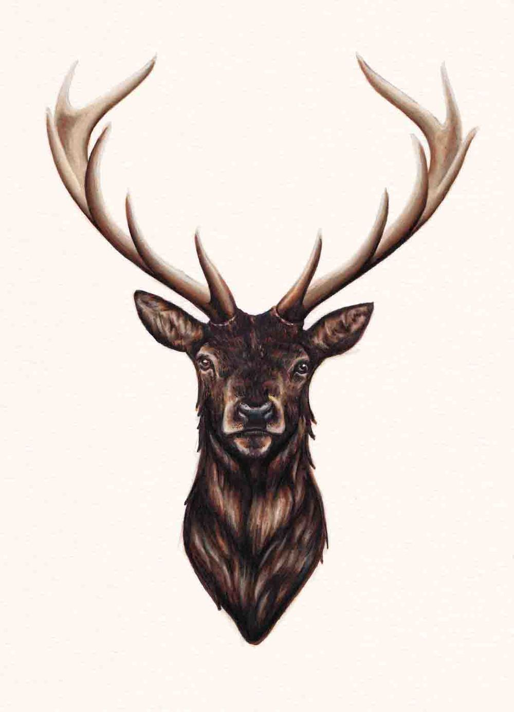Drawn stag Pinterest drawing  stag drawing
