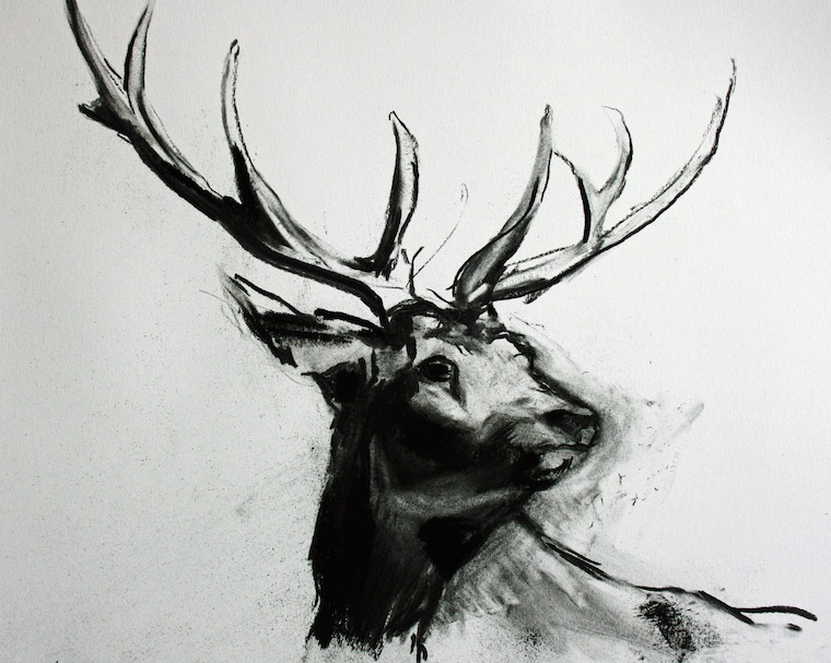 Drawn stag Art and Deer Pinterest Drawings