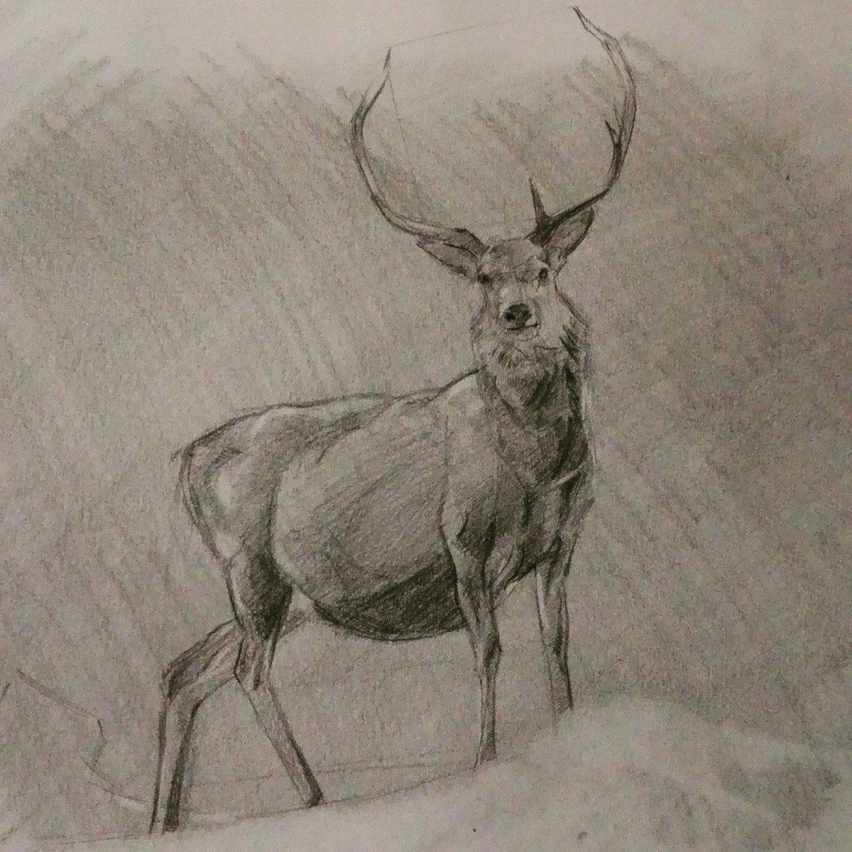 Drawn stag bambi