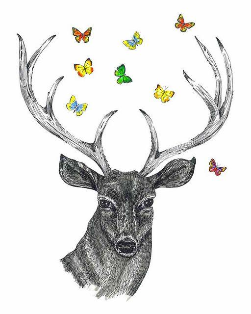 Drawn stag deer antler Deer to deer images how