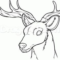 Drawn stag deer drawing Deer drawing  stag stag