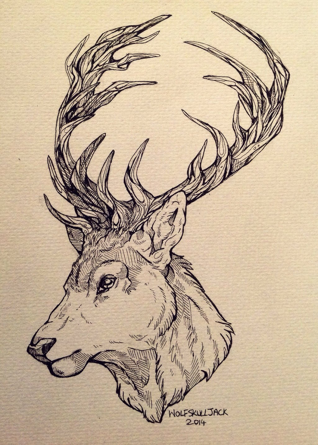 Drawn stag deviantart DeviantArt The Stag WolfSkullJack on