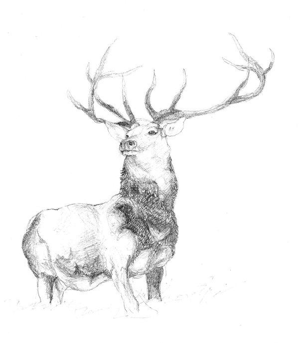 Drawn stag deviantart Stag smilie5768 by DeviantArt by