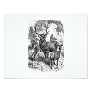Drawn stag drinking water Vintage & Doe Stag Red