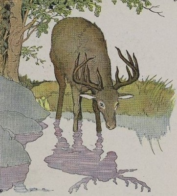 Drawn stag drinking water THE (Aesop THE 51 AND