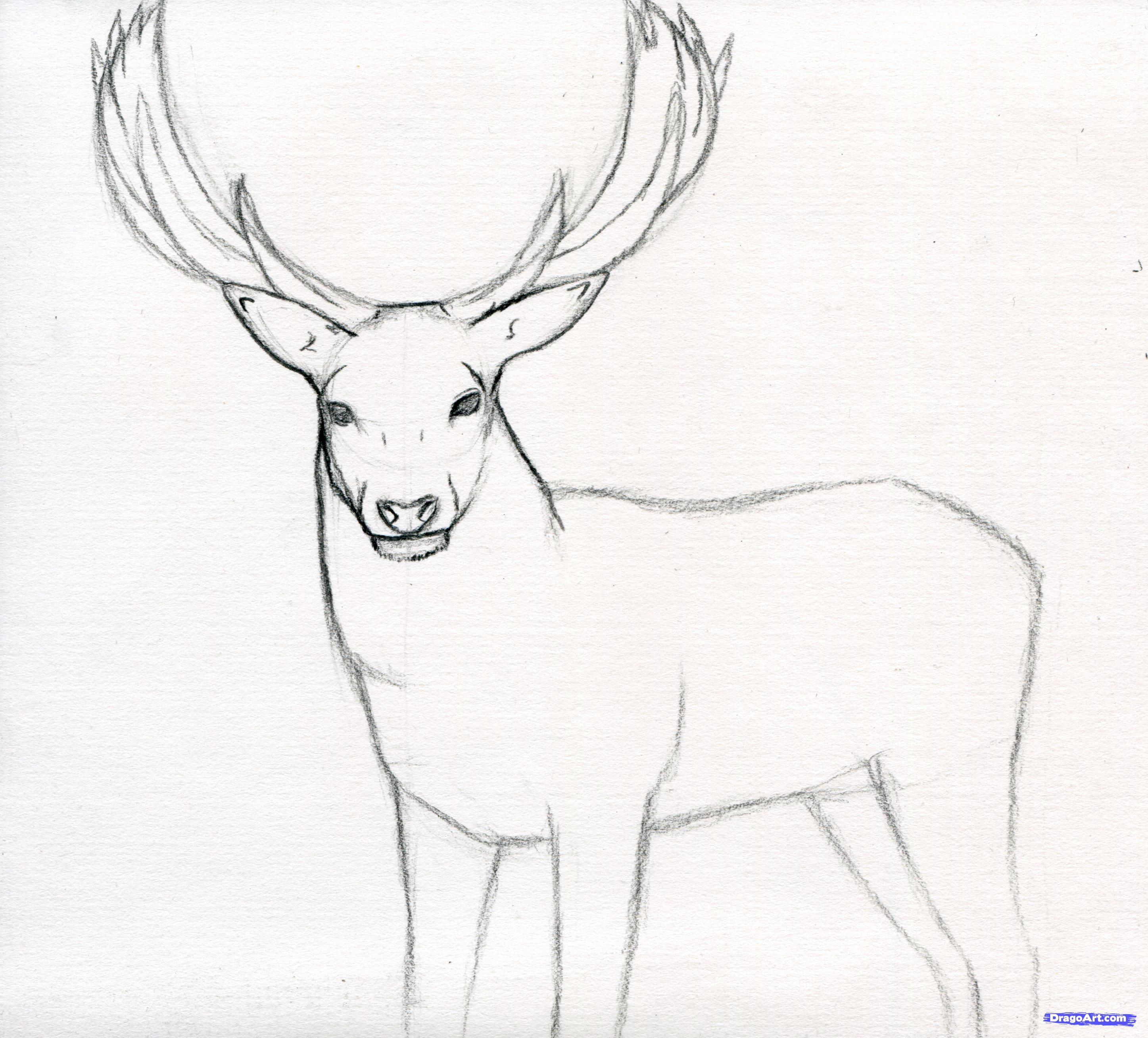 Drawn stag deer drawing Trend To How of Download