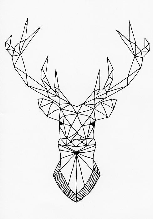 Drawn stag geometric By Stag Geometric Hill Drawing