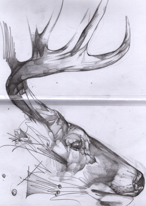 Drawn stag hunting On Elk best Pinterest 94