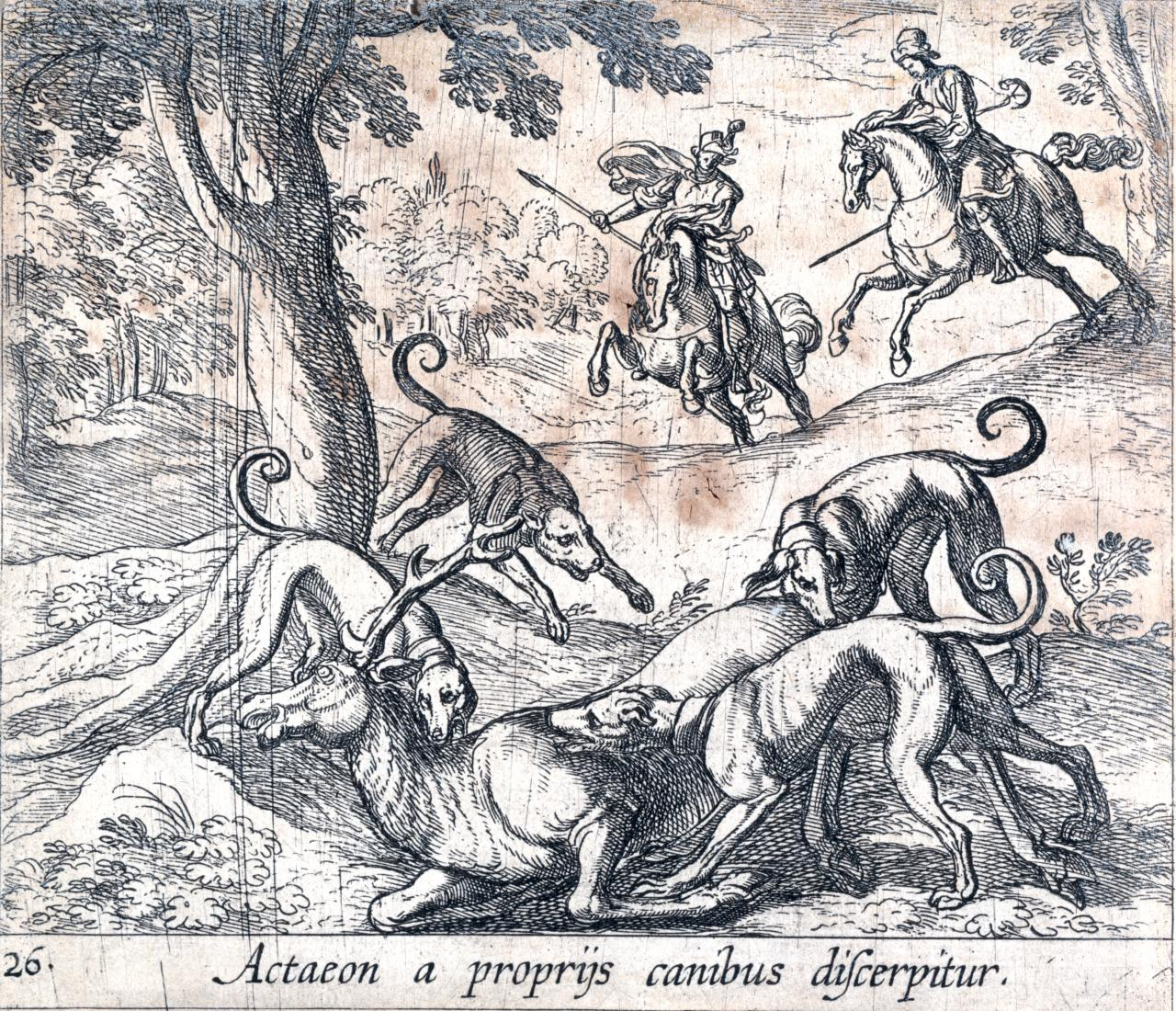 Drawn stag hunting NGV depiction grisly not Actaeon