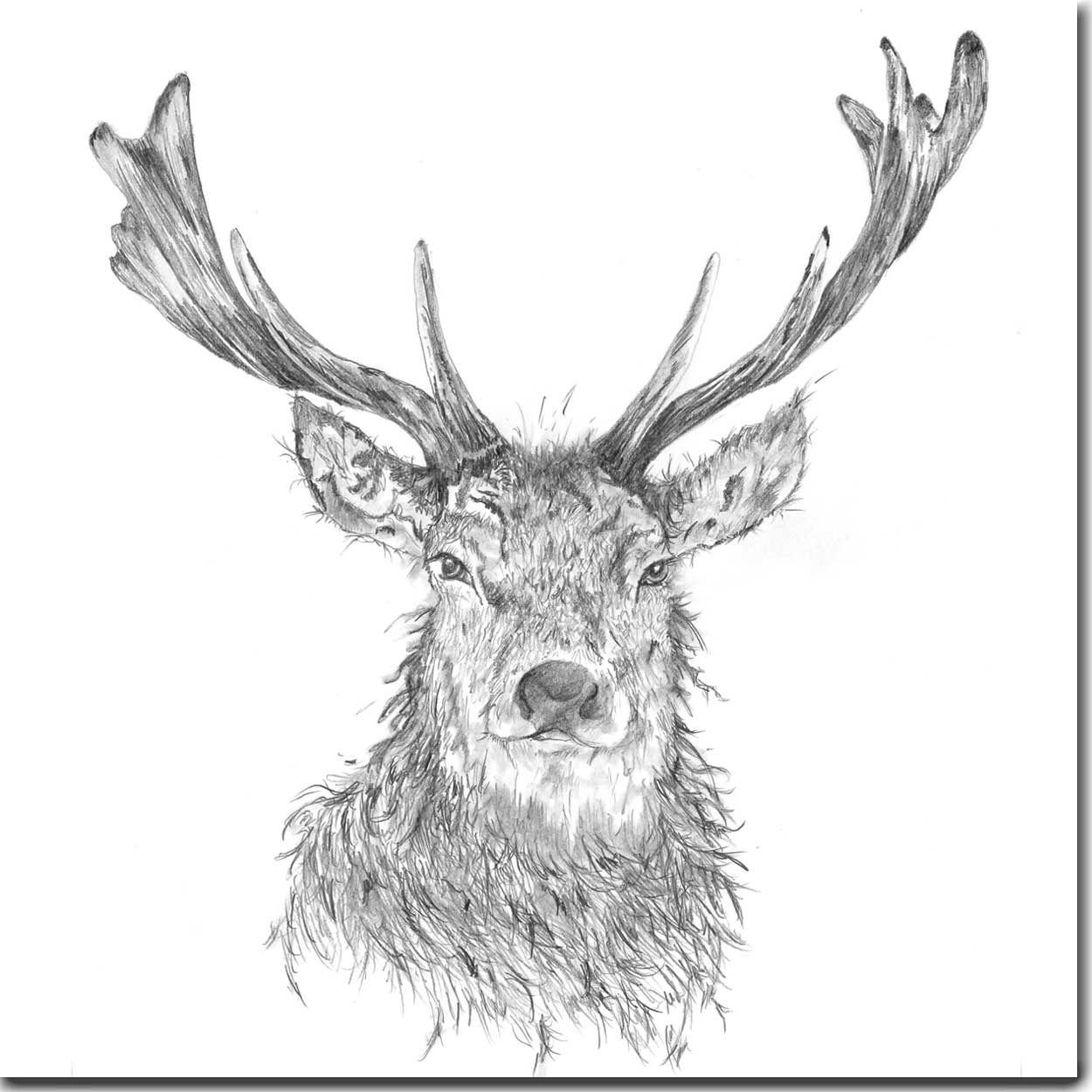 Drawn stag majestic Boddy Card Stag Greeting Stag