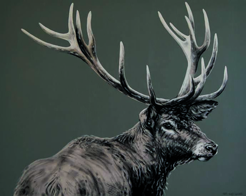 Drawn stag majestic Stags Cope  Joanne Majestic