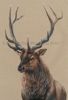 Drawn stag majestic #reindeer Stag  from #painting