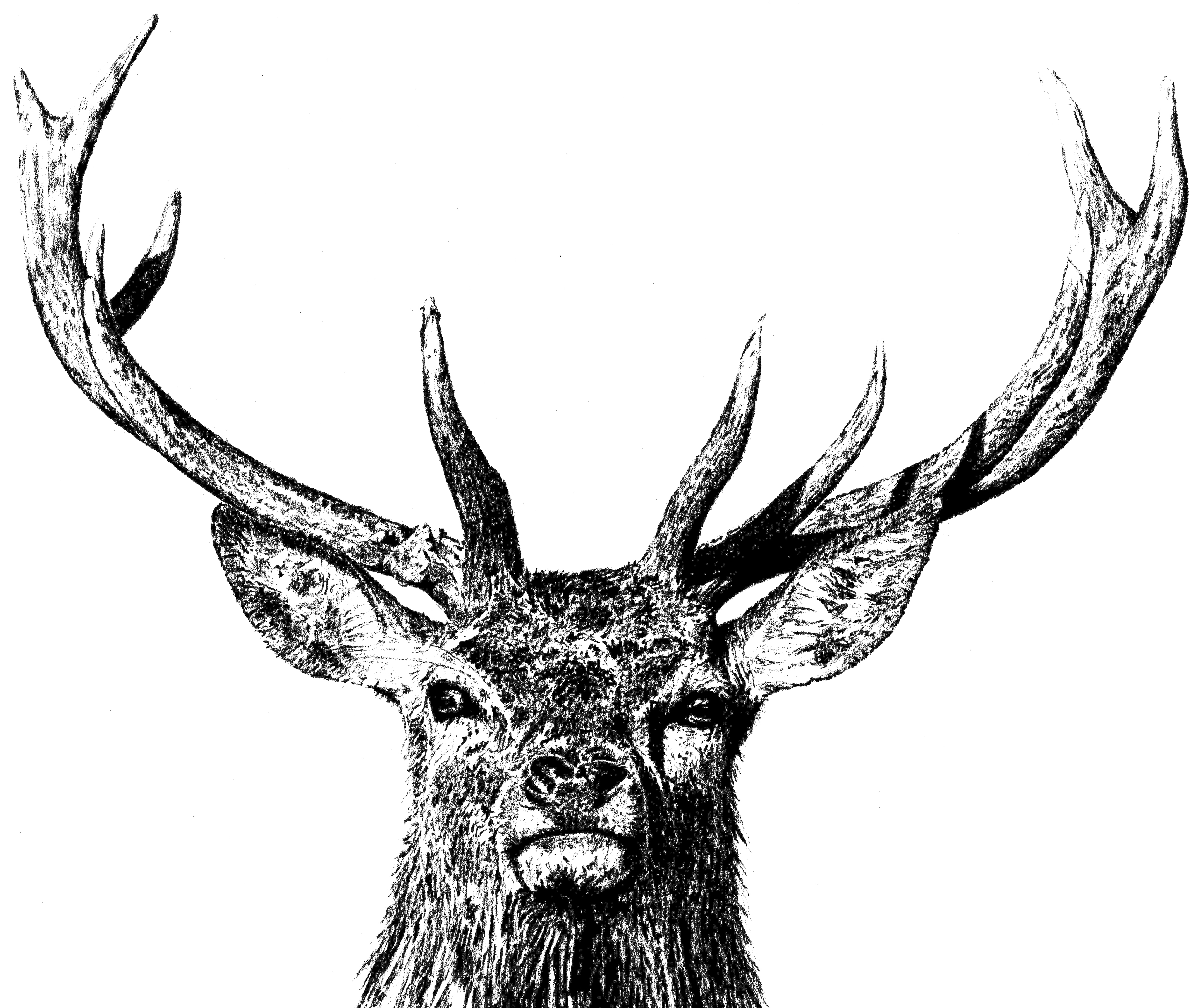 Drawn stag majestic Majestic Arts Table majestic Weaver