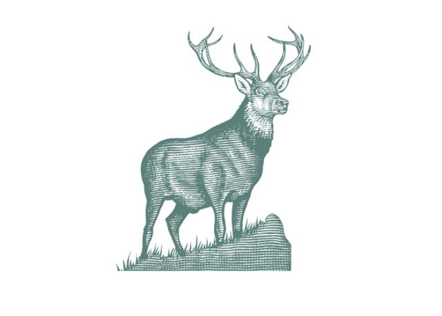 Drawn stag noble Illustrations: Stag Icon Icon Noble