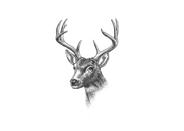 Drawn stag noble Stag Stag Steven Illustrations: Noble