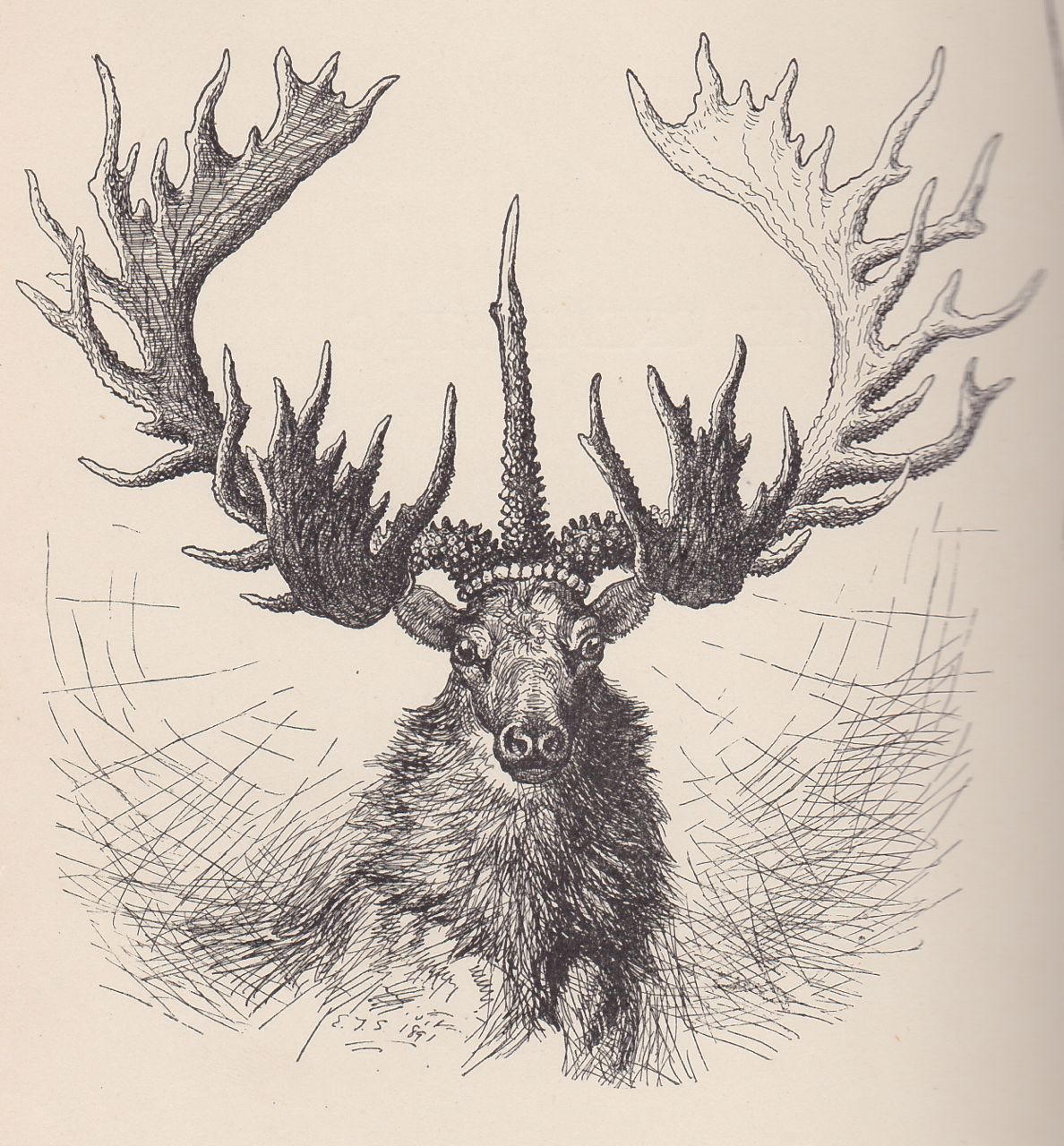 Drawn stag noble Master GreatStagSeton_web Woodsman The Stag