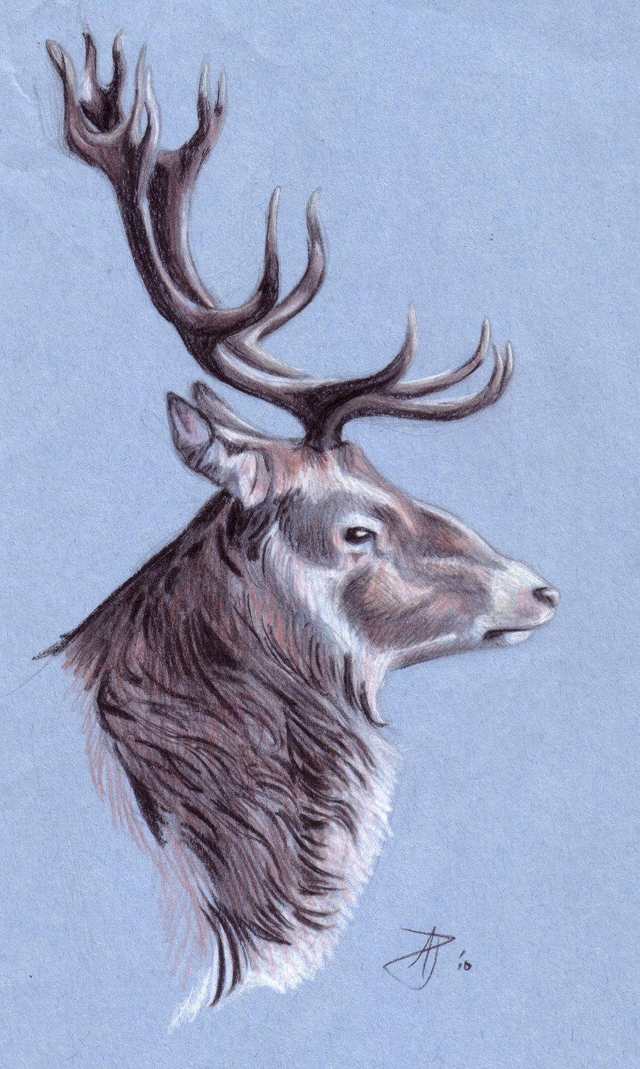 Drawn stag profile Ishkamoo DeviantArt Stag vamphawkeh on