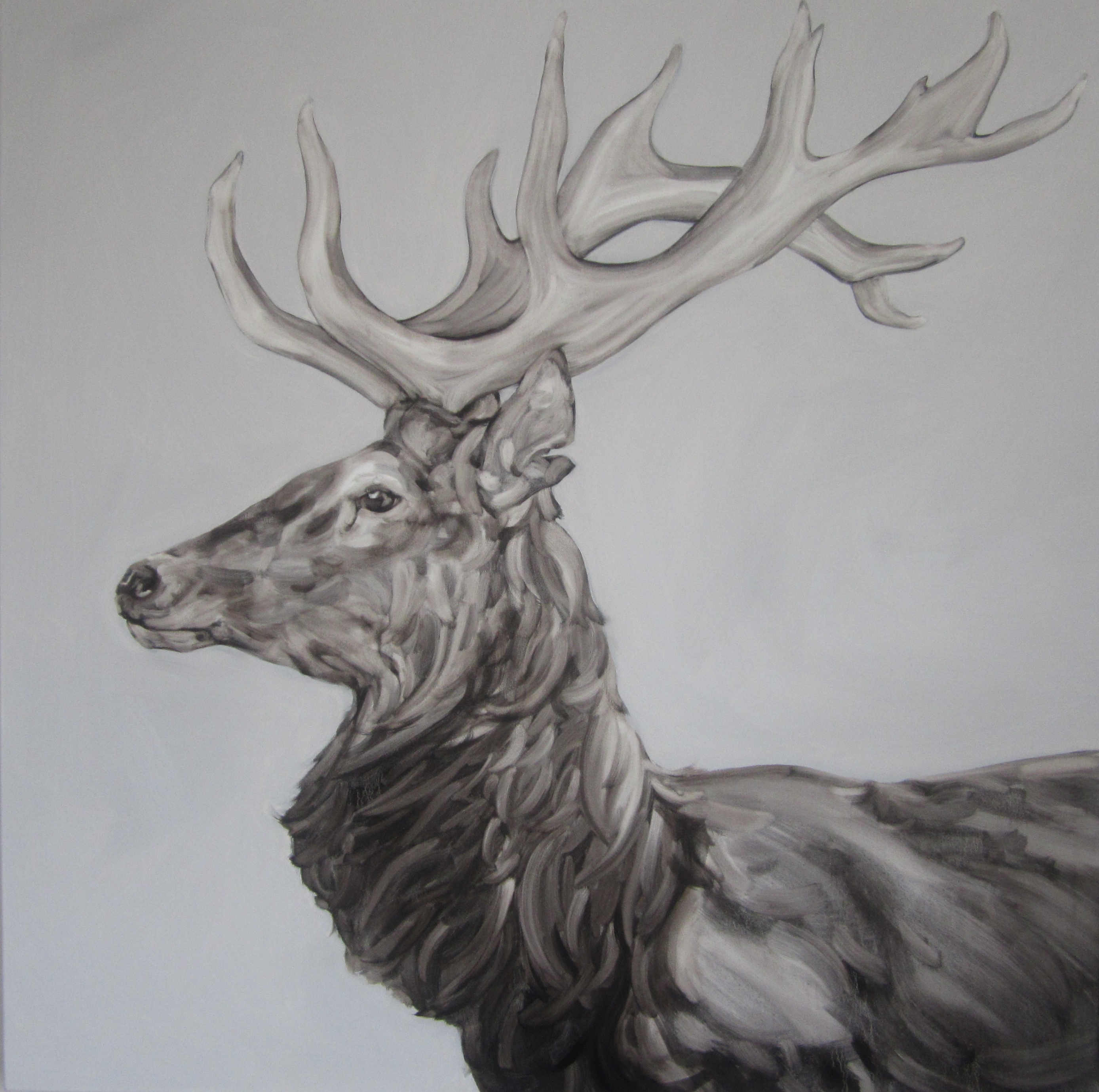 Drawn stag profile ( Lost And Community )100x100cm