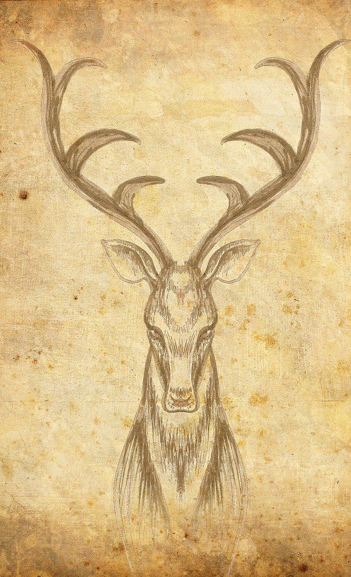 Drawn stag profile Profile by clara Stag di