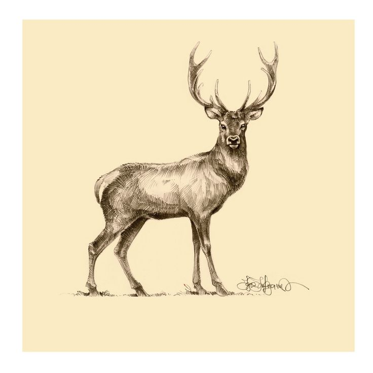 Drawn stag spotted deer  Pinterest A about deer
