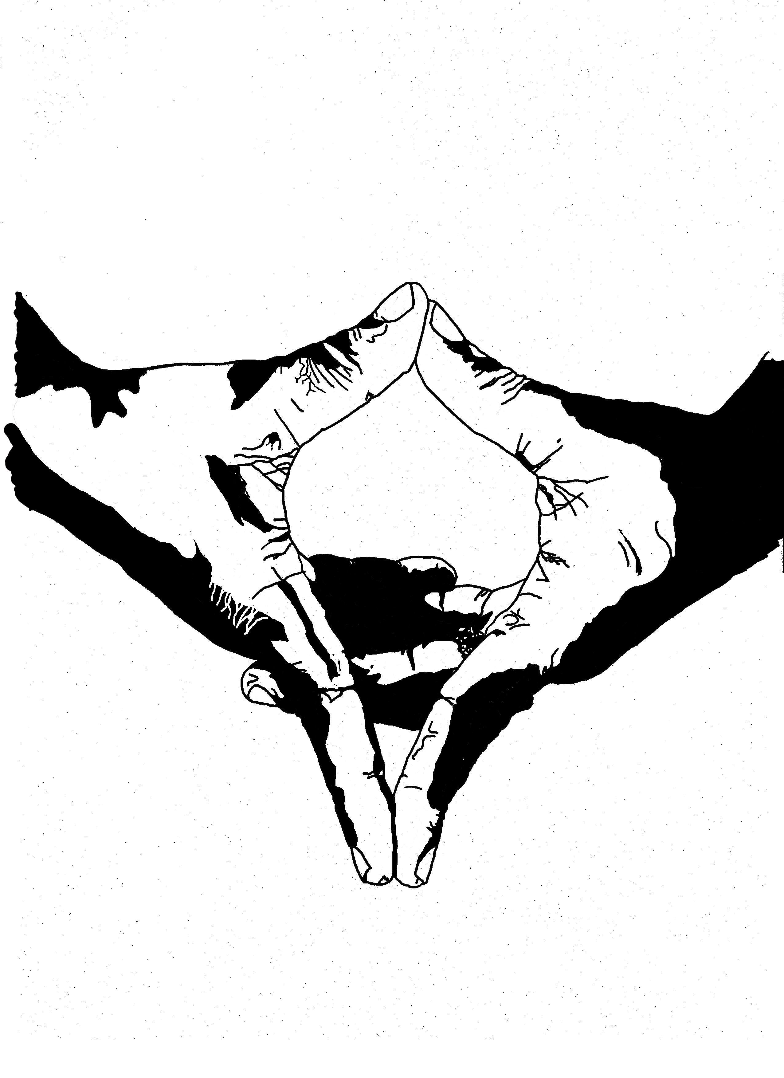 Drawn stare david Star David Sign: Hand David