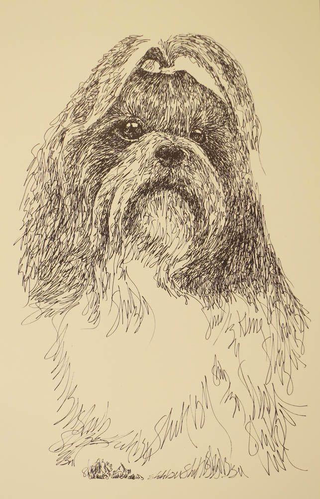 Drawn stare plain 79 Shih Pinterest dog 79