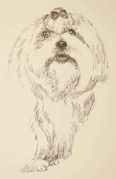 Drawn stare plain Maltese: Art Stephen by Kline