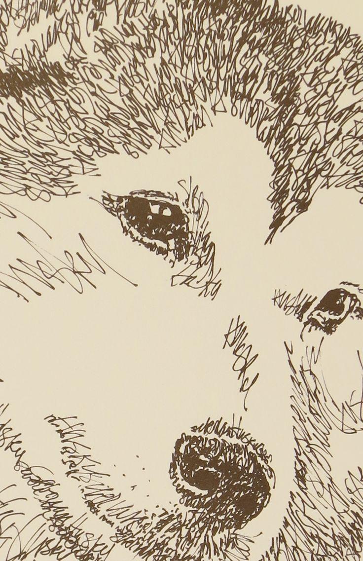 Drawn stare plain Siberian dog portraits portraits photographs