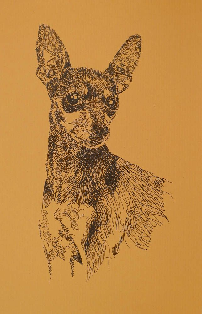 Drawn stare plain Miniature Dog art Portrait portraits
