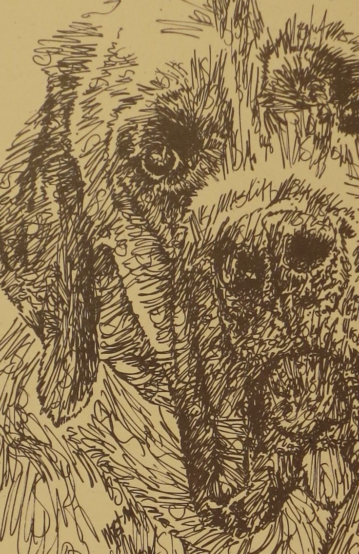 Drawn stare plain 47 Scottish Scottish art by
