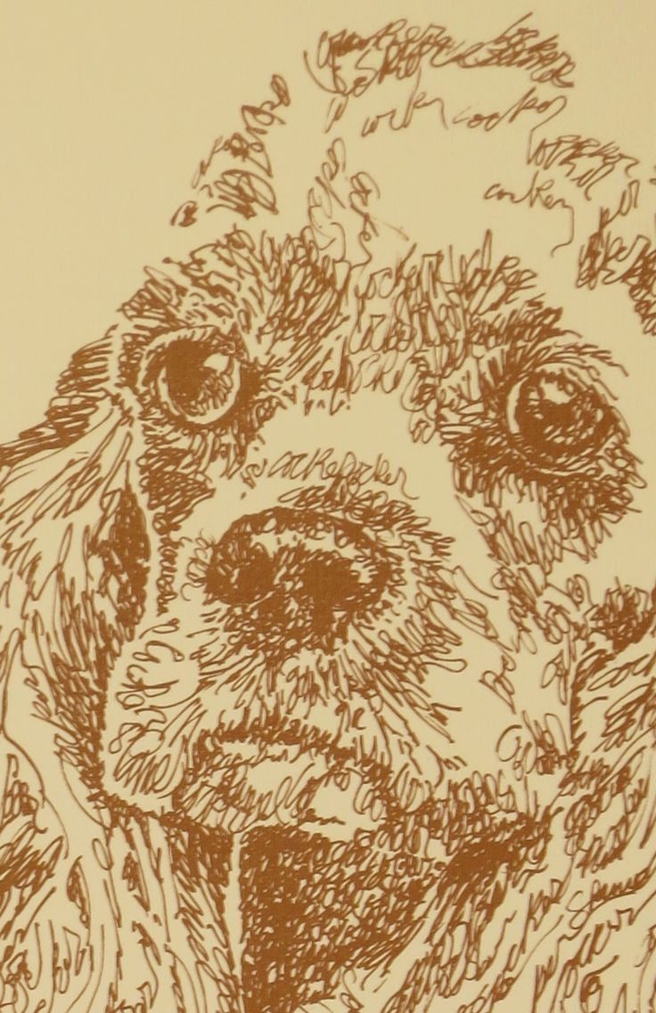 Drawn stare plain Cocker dog portraits portraits photographs