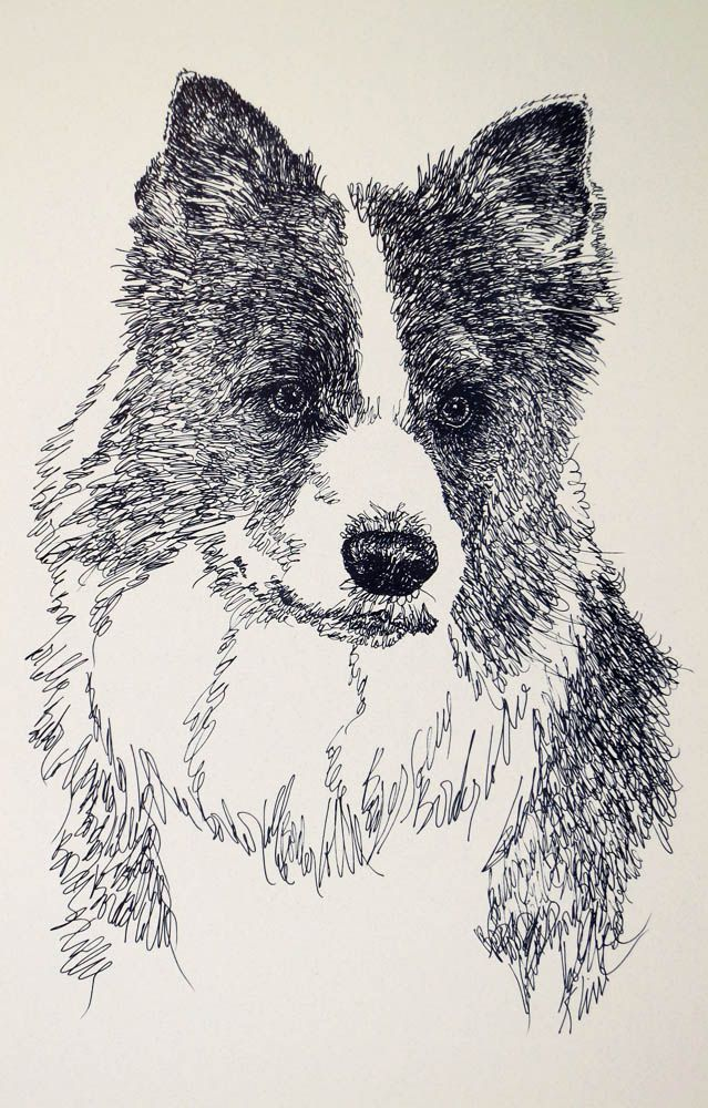 Drawn stare plain Border Dog art Portrait portraits