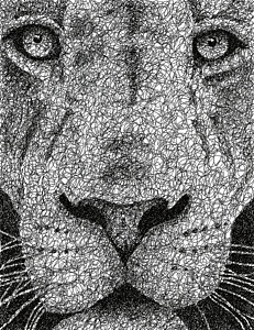 Drawn stare scribble Lion Staring America Drawings 10)