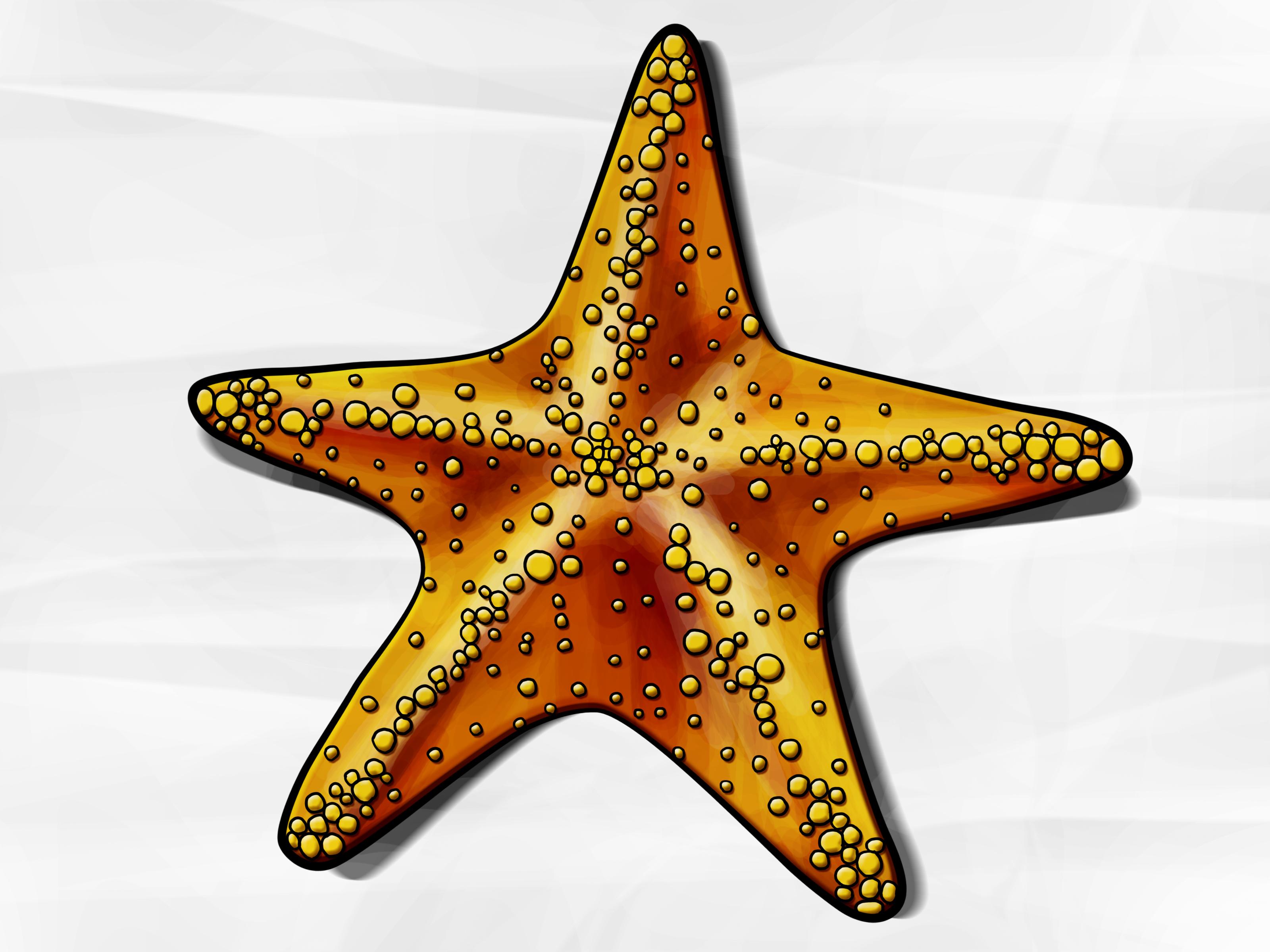 Drawn star basic How wikiHow Starfish: 6 to