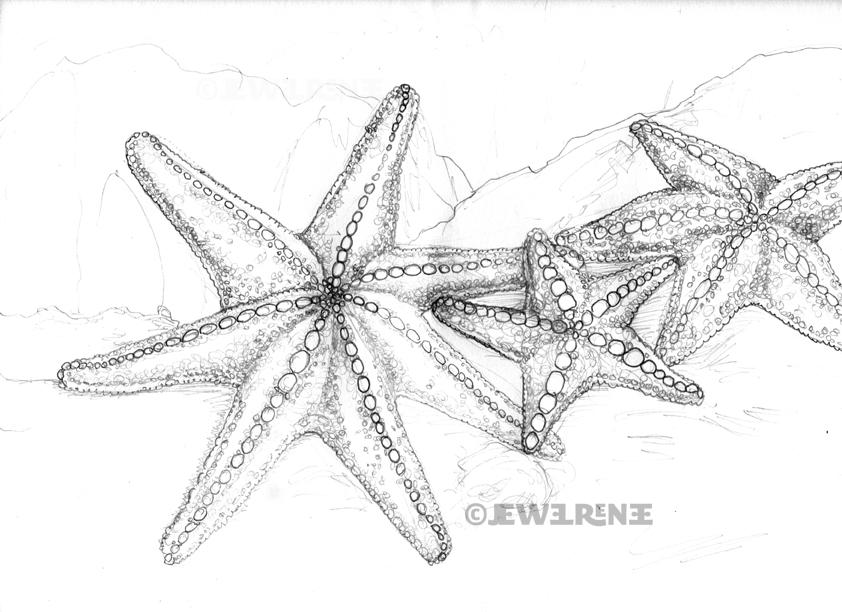 Drawn starfish aquatic life Pin images draw this draw