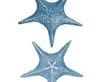 Drawn starfish blue starfish Drawing Home Blue Starfish Coastal