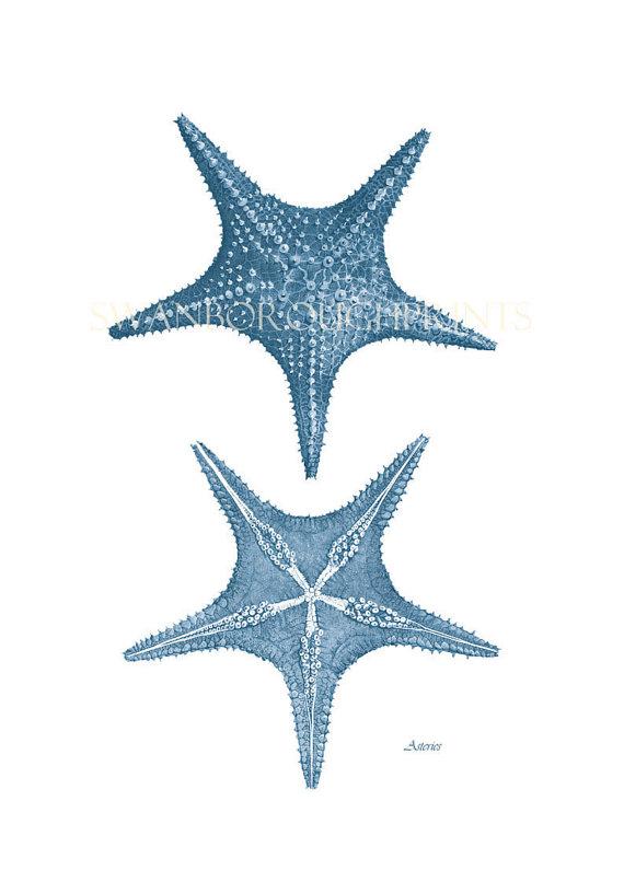 Drawn starfish blue starfish Drawing Bathroom Print Home Blue