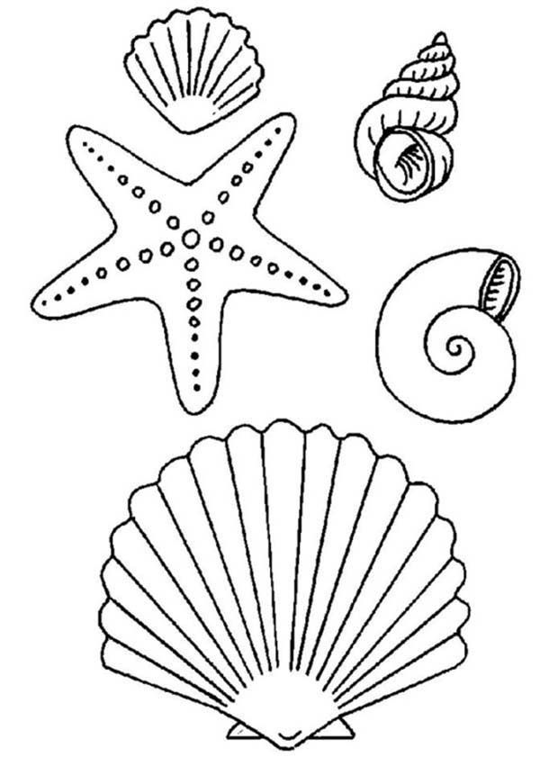Drawn starfish sea creature And Play Coloring Starfish Sea